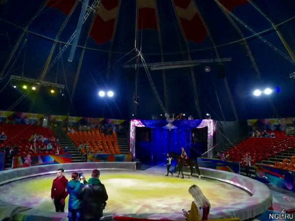 В цирке побывал вдруг. Понравилось
